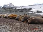 Antarctica 012 (Large)