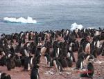 Antarctica 021 (Large)
