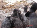 Antarctica 022 (Large)