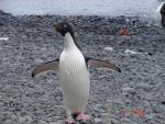 Antarctica 046 (Large)